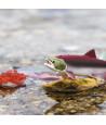 Cycle de la vie d'un saumon