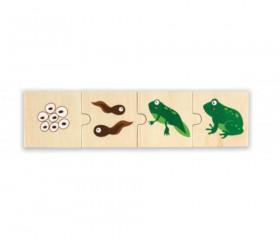 6 Puzzles en bois 4 pièces cycle de vie d'une grenouille