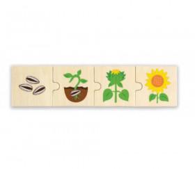 6 Puzzles en bois 4 pièces cycle de vie d'une fleur