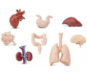 Organes Humains miniature - tube de 8 pièces