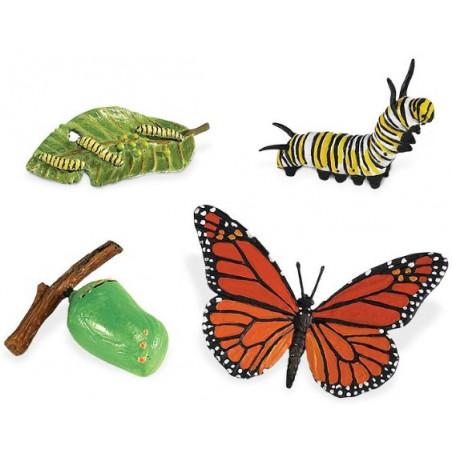 Cycle de la vie d'un papillon Monarque