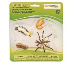Cycle de la vie d'un moustique