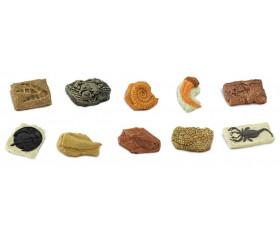 Anciens fossiles - paléontologie