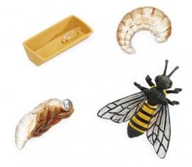Cycle de la vie d'une abeille